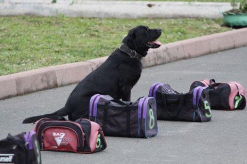 كلاب بحث القنابل والمواد والمتفجرة