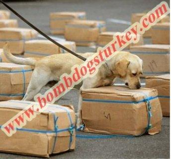 مركز تدريب كلاب القنابل والبحث عن المواد المتفجرة