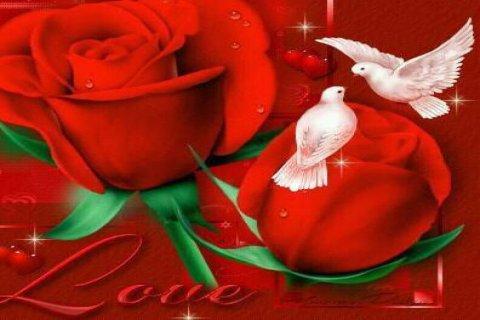 البحث عن الحب