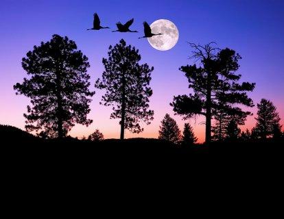 طيبة هادئة متعلمة ابحث عن الحب والإستقرار